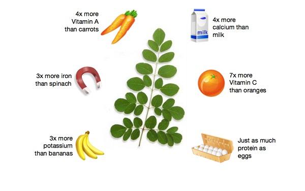 Mẹ nên cho bé ăn bao nhiêu gram lá chùm ngây mỗi ngày?